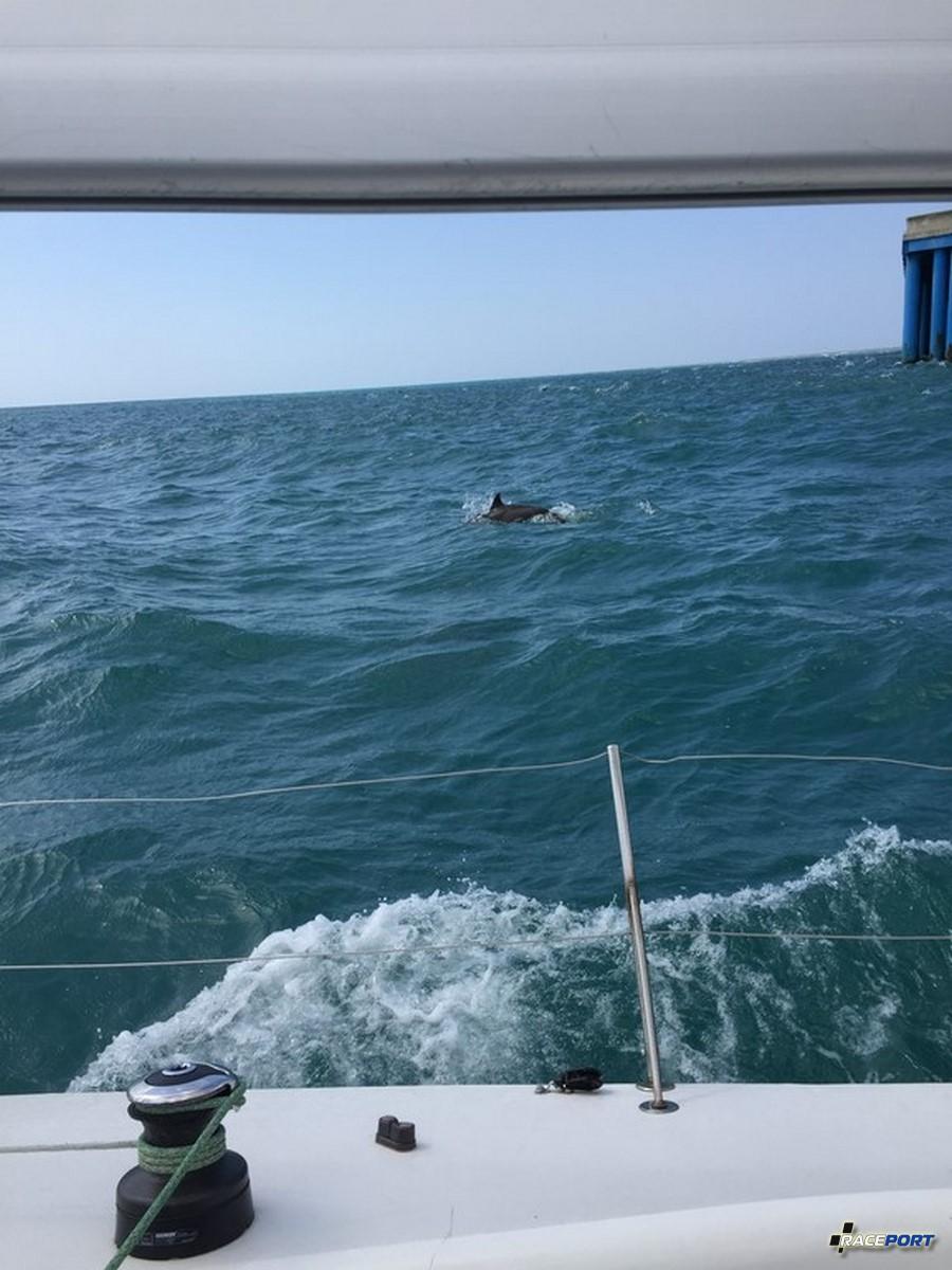 Во время регаты БМВ, видели достаточно много дельфинов