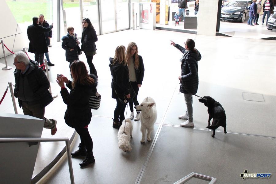 Оказывается, это нормально! Был удивлен! Немцы ходят по музеям с собаками и как вы видите это не карманные животные.)